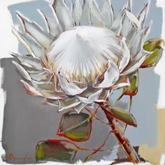 SOLD - Please contact us should you be interested in having a painting done for you x Botanical Drawings, Botanical Art, Watercolor Sketch, Watercolor Illustration, Protea Art, List Of Paintings, Arte Floral, White Art, Art Oil