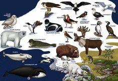 praatplaat dieren op noordpool