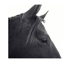 Dark Horse in Profile Framed Prints by Jennifer Meyers #potterybarn