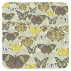 Vintage Butterfly Moth Chart Pattern Square Paper Coaster - pattern sample design template diy cyo customize