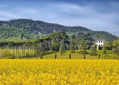 Colli Euganei, een verborgen paradijs | Sogno Italiano
