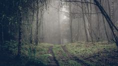 "Cabin Fever - Taken on a very misty day in Perthshire, Scotland, this forest reminded me of numerous ""scary"" movies I have seen over the years.  This is a 15 shot image. 3 x 5 shot HDR portrait orientation images stitched together. I was, again, looking for an image of a misty forest for my 365 challenge. This one didn't quite make the cut but I always liked it nonetheless."