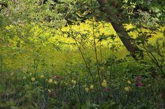 Meadow in Wisley