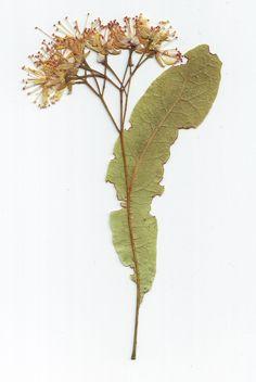 Foto gratis de unas flores con una gran hoja verde > http://imagenesgratis.eu/imagen-artistica-de-una-hoja-y-flores/