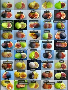 We have a large collection of Fig tree varieties and and different fruit trees, such as Jujube, Pawpaw, Persimmon, kiwis. Fig Fruit, Fruit And Veg, Fruit Trees, Fruits And Vegetables, Fruit Garden, Edible Garden, Growing Fig Trees, Fig Varieties, Fig Recipes