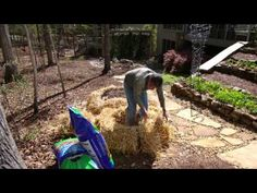 "Building a Straw Bale ""container""   This would work to plant above the tree roots in the grove, but would look ugly.   How to cover the straw??"