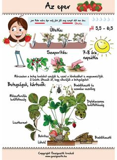 Easy Garden, Herb Garden, Garden Plants, Home Vegetable Garden, Home And Garden, Back Garden Landscaping, Medicinal Plants, Back Gardens, Garden Projects