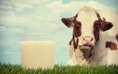 Latte con aflatossine cancerogene: scattano i sequestri in Veneto per 5000 forme di formaggio. Dopo lo scandalo in Lombardia continuano le indagini di Asl e Nas