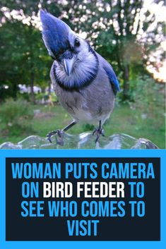 Check out how many different bird species visit this backyard bird feeder. Pretty Birds, Beautiful Birds, Animals Beautiful, Animals And Pets, Baby Animals, Different Birds, Animal Antics, Backyard Birds, All Gods Creatures