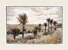 Aloe Heights - Marlene Neumann Fine Art Photography  www.marleneneumann.com  neumann@worldonline.co.za