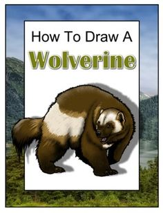 Drawing with John presents: How to Draw a Wolverine. Begin with a pencil sketch and end with a detailed ink drawing. Includes a descriptive paragraph and five question quiz. Wolverine Animal, Wolverine Art, Lone Pine, Wolverines, Paragraph, Science Activities, Life Science, Predator, Sunday School
