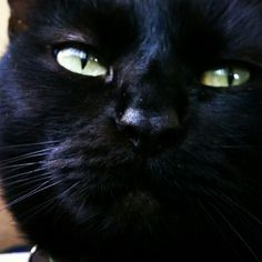 My lovely friends cat emmie @Jessica Zepeda