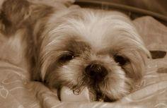 My cute little puppy, Yvette (7)