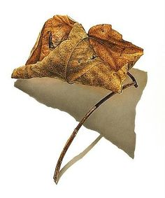 DAVID MORRISON Rusted Leaf Series #2, 2006 Colored pencil on paper 20 x 16 1/2 inches