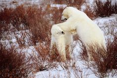 Want To Visit:  Alaska, USA