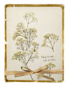 Babys-Breath for pure of heart an illustration by Katy Hackney