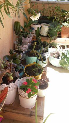 Amazing Nature, Nature Photography, Photos, Pictures, Kpop, About Plants, Beautiful Flowers, Bonito, Landscape