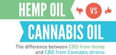 Hemp CBD Oil vs. Cannabis CBD Oil 1