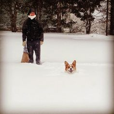 By the end of the day on Tuesday, snowfall in Boston may well have reached 1.5 to 2 Corgis! Thanks to Erika Vargas for this Corgi-licious capture. If you liked this post, check out these!It's a #Corgi SnOwPaLooZa!Wordless Wednesday: 15 Corgis Fed Up With Your Internet SurfingVideo Biscuit: Snow Day 2!The Daily Corgi Goes On [...]