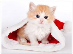 Kostenlose Online Puzzles - nicht nur zu Weihnachten!