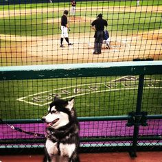 Dubs showing some support for UW Baseball. WOOF!