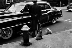 Легендарный и ироничный фотограф Эллиотт Эрвитт (Elliott Erwitt)