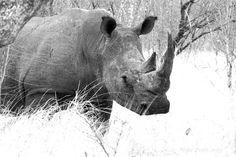 The Big 5 » Focusing on Wildlife