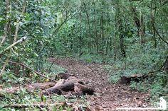 Sendero - La National Geographic cataloga al Parque Corcovado y sus alrededores como la región con mayor biodiversidad del mundo y realmente lo es, ni bien bajamos de la lancha los monos titi muy curiosos vinieron a saludarnos.