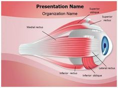 Ophthalmology Eye Muscles Powerpoint Template is one of the best PowerPoint templates by EditableTemplates.com. #EditableTemplates #PowerPoint #Pupil #Eye #Iris #Ophthalmologist #Optometry #Optician #Ophthalmology