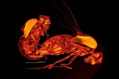Micro CT scan of the interior of two mating fruit-flies. The male is on the left; the female on the right.