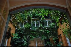- Patrick Blanc - vertical gardens