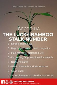Deciphering Meaning of Lucky Bamboo Stalks Numbers – Feng Shui Beginner Deciphering Meaning of Lucky Bamboo Stalks Numbers Lucky Bamboo Stalks Number and Their Symbolic Meanings. Check out he meanings behind the use of number of stalks each have Feng Shui Energy, Feng Shui Wealth, Feng Shui Tips, Room Feng Shui, Feng Shui House, Feng Shui Office, Feng Shui Bedroom Tips, Feng Shui Art, Meaning Of Lucky