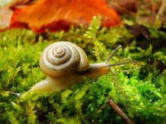 Lord Snail by Zerseu.deviantart.com on @deviantART