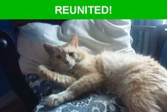 Great news! Happy to report that Foxface has been reunited and is now home safe and sound! :)