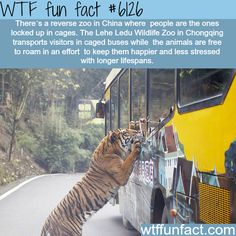 WTF Fun Facts is updated daily with interesting & funny random facts. We post about health, celebs/people, places, animals, history information and much more. New facts all day - every day! Oh The Places You'll Go, Cool Places To Visit, Places To Travel, Wtf Fun Facts, Funny Facts, Random Facts, Random Stuff, Funny Memes, Crazy Facts