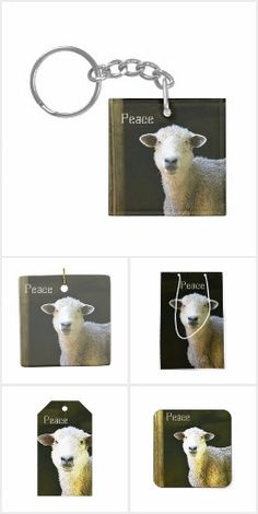 Sweetie Pie Sheep Collection