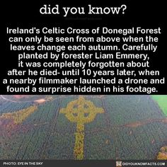 Ireland's Celtic Cross of Donegal Forest can only be seen from above when the leaves change each autumn. Carefully planted by forester Liam Emmery, it was completely forgotten about after he died- until 10 years later, when a nearby filmmaker. Did You Know Facts, Things To Know, Weird Things, Wtf Fun Facts, Random Facts, Creepy Facts, Funny Facts, Scary, Funny Memes
