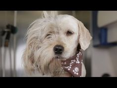 Charlie the Shelter Dog by thepetcollective: The makeover which saved his life. #Dogs #Shelter_Dogs