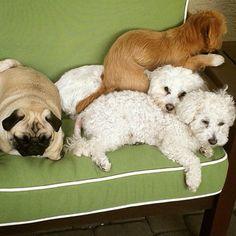 Sleep with families