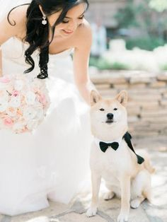 Shiba inu in a ballroom wedding.