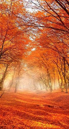 Beautiful fall scenery & orange leaves scattered across an old path. The post Beautiful fall scenery & orange leaves scattered across an old path. autumn scenery appeared first on Trendy. Beautiful World, Beautiful Places, Beautiful Pictures, Stunningly Beautiful, Beautiful Scenery, Beautiful Forest, Autumn Scenes, Autumn Forest, All Nature