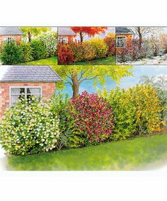 Four Seasons Hedging product photo