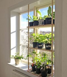 Inspiring Floating Window Plants Design Ideas Home Ideas Window Shelves, Plant Shelves, Window Plants, Hanging Plants, Amazing Gardens, Beautiful Gardens, Diy Furniture Decor, Garden Windows, Plant Design
