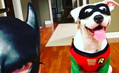 BatDad Adopts Pit Bull To Be DogRobin After She Changes His Mind About Breed Stereotypes
