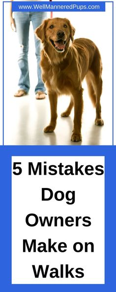 The 5 Mistakes that Dog Owners make when taking their Dogs on Walks!  #dogs #walking #training #treats #dogtips Puppy Training Schedule, Dog Training Courses, Dog Training Tips, Tortoise As Pets, Aggressive Dog, Find Pets, Dog Names, Dog Walking, Dog Owners