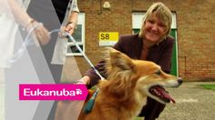 Cancer detecting Dogs - Part 1 | Extraordinary Dogs