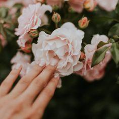 Las rosas en flor son hermosas y realzan el aspecto de los jardines. A muchos jardineros aficionados les gusta plantar rosales, pero desafortunadamente a los pulgones también les encantan desafortunadamente estas bellas y fragantes plantas y les gusta instalarse en ellas durante la primavera y el verano.Los pulgones no perjudican a la planta a largo plazo, ya que volverá a crecer el año que viene. Sin embargo, las hojas y flores de la temporada se dañan en gran medida si la infestación es… Faith Quotes, Bible Quotes, Plantar Rosales, Wallpapers Gospel, Blessed Is She, Daughters Of The King, Wedding Beauty, Wedding Nail, Bridal Beauty