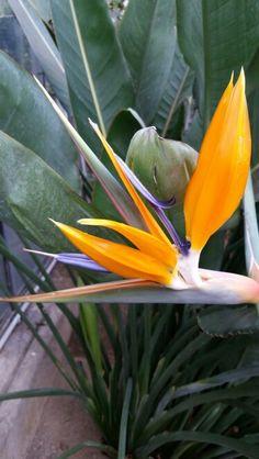Blumen - Flora in Köln