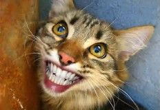 Image result for Smiling Animal Faces