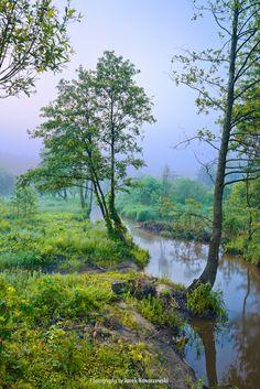 Misty morning with a tree at the edge of a brook. Amazing landscape. Beautiful nature, Poland. Masovia outdoors, Mazowsze, Polska. Photography by Jarek Konarzewski